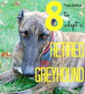 8-reasons-to-adopt-a-retired-greyhound_pin