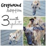 adoption-update_pin