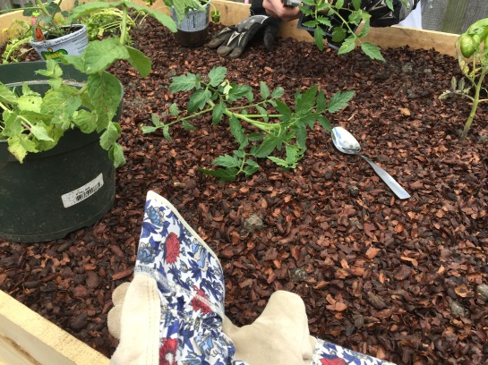 planting with spoon